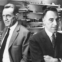 ACHILLE and PIER GIACOMO CASTIGLONI