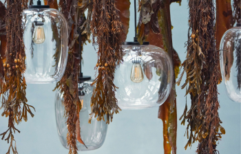 Bolia designová závěsná svítidla Grape Small Pendant wide