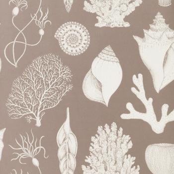 Designové tapety Shells